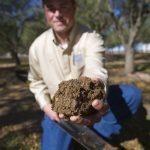 soil moisture sample