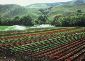 Photo Courtesy of USDA-NRCS