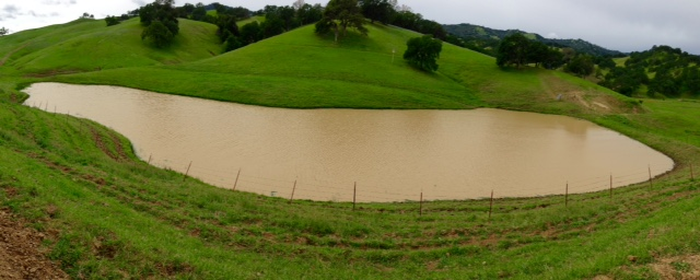 Overlooking a rainfed pond at Yolo Land & Cattle Co.