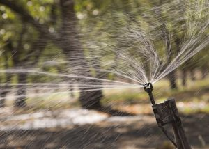 Micro irrigation irrigating orchards in California.