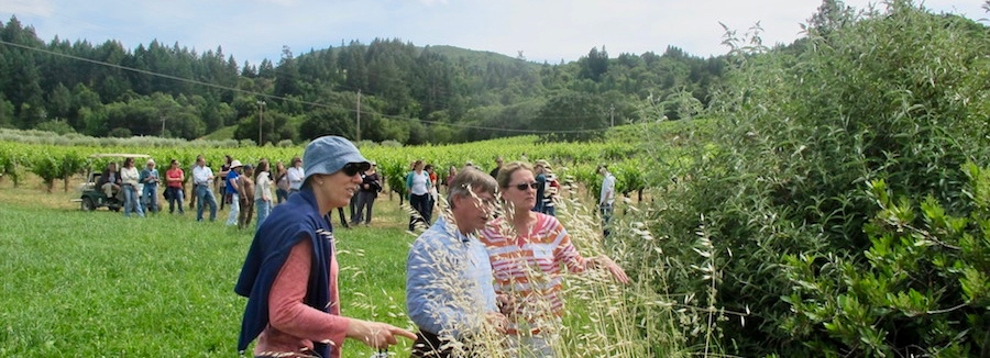 Participants on a CalCAN biodiversity farm tour inspect a hedgerow at Preston Vineyards. Hedgerows sequester carbon in their woody biomass and roots and provide vital habitat to birds, beneficial insects and pollinators.