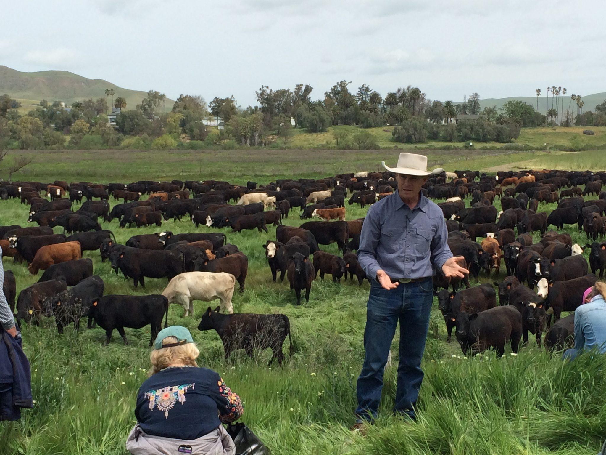 Rancher Joe Morris in front of a high-density grazing demonstration.