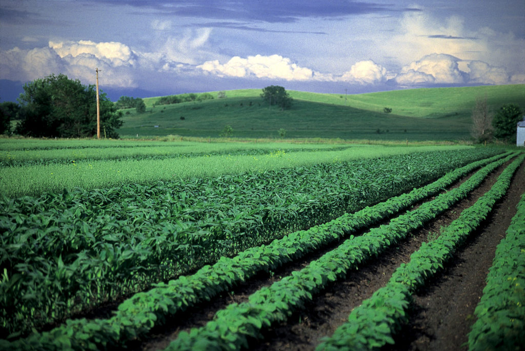 diverse-crops-in-big-field-credit-SARE