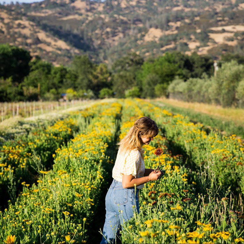 Full Belly Floral, Full Belly Farms (Yolo County)