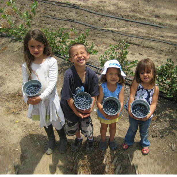 Santa Barbara Blueberries & Restoration Oaks Ranch (Santa Barbara County)
