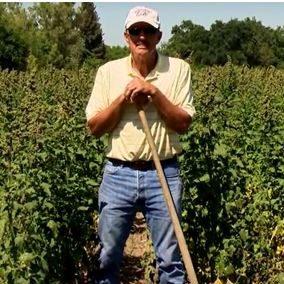Park Farming Organics (Sutter County)