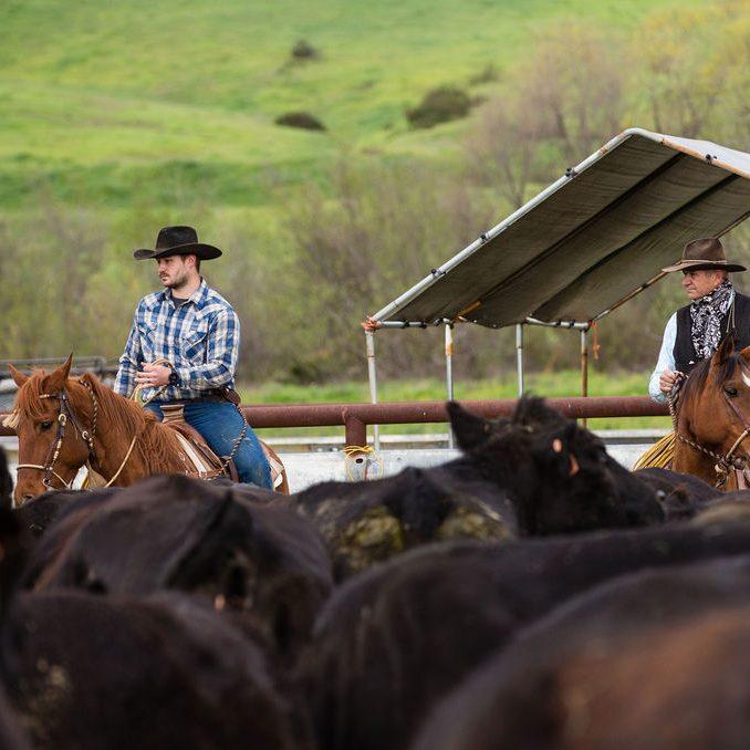 4J Horse & Livestock Co (San Diego County)