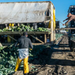 farmworkers working